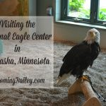 Visiting the National Eagle Center in Wabasha, Minnesota