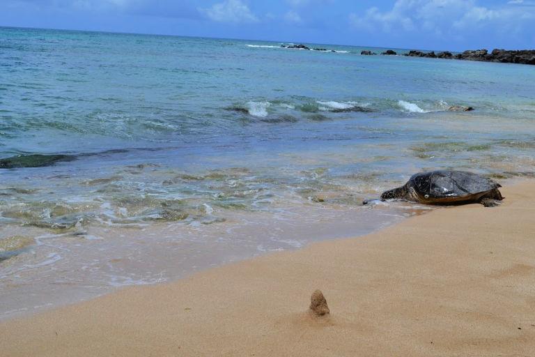 Our Hawaiian Babymoon: Snorkeling with the Sea Turtles at Laniakea Beach